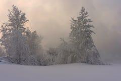 Schnee bedeckte Bäume stockbild