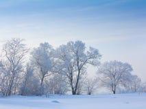 Schnee bedeckte Bäume Stockfotografie