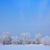 Schnee bedeckte Bäume Lizenzfreie Stockfotografie