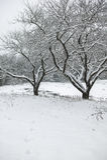 Schnee bedeckte Bäume auf einem Gebiet. Stockfoto