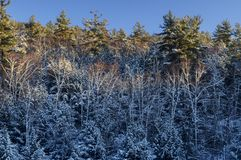 Schnee bedeckte Bäume in den Adirondack-Bergen des Staat New York Lizenzfreie Stockfotografie