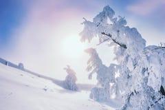 Schnee bedeckte Bäume in den Bergen bei Sonnenuntergang Stockfotografie