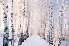 Schnee bedeckte Bäume in der Waldwinterlandschaft stockfoto