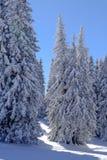 Schnee bedeckte Bäume in einem Wald Lizenzfreies Stockbild