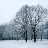 Schnee bedeckte Bäume im Park Kleines Haus im Schnee deckte Holz in den Schweizer Alpen ab Lizenzfreie Stockfotos