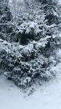 Schnee bedeckte Bäume im Tannenwald stockbilder