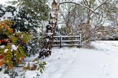 Schnee bedeckte Bäume und Büsche Stockbild