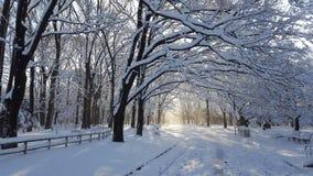 Schnee bedeckte Bäume und eine Parkstraße im Winter lizenzfreies stockfoto