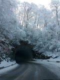Schnee bedeckte Bäume und Tunnel Stockbild