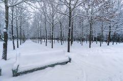 Schnee bedeckte Bank Stockfotografie