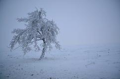 Schnee bedeckte Baum Stockfotografie