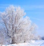 Schnee bedeckte Baum Lizenzfreie Stockfotografie