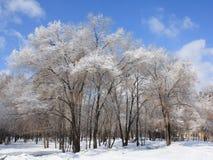Schnee bedeckte Baum Lizenzfreies Stockbild