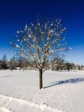 Schnee bedeckte Baum an einem Wintertag Lizenzfreies Stockbild