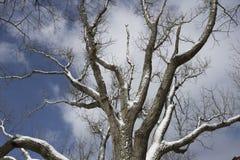 Schnee bedeckte Baum mit blauem Himmel Stockfotos
