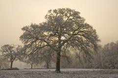Schnee bedeckte Baum mit nebelhaftem Hintergrund Stockfotos