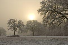 Schnee bedeckte Baum mit nebelhaftem Hintergrund Stockbilder