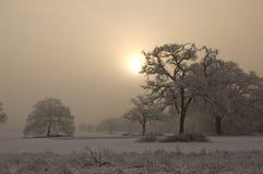 Schnee bedeckte Baum mit nebelhaftem Hintergrund Stockfoto