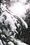 Schnee bedeckte Baumaste mit einer Kappe Stockfoto