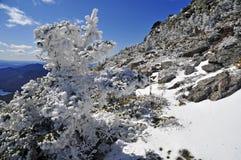 Schnee bedeckte Berge und alpine Landschaft im Adirondacks, Staat New York mit einer Kappe Stockbild