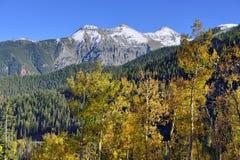 Schnee bedeckte Berge und gelbe Espe Stockfotografie