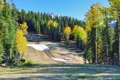 Schnee bedeckte Berge und grüne und gelbe Espe Stockfotos