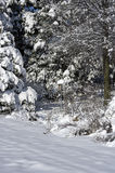 Schnee bedeckte blauen Vogel-Kasten Lizenzfreie Stockfotografie