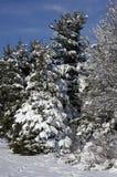 Schnee bedeckte blauen Vogel-Kasten Lizenzfreies Stockbild