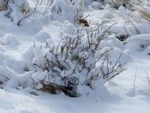 Schnee bedeckte Busch Stockfoto