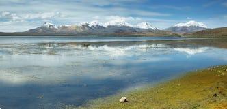 Schnee bedeckte das Hochgebirge mit einer Kappe, das im See Chungara reflektiert wurde Stockfotografie