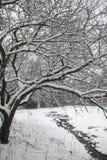 Schnee bedeckte den Baum, der über einem kleinen Strom sich wölbt. Lizenzfreie Stockbilder