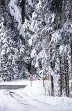 Schnee bedeckte die Überfahrtwege, die durch Kiefernholz angegrenzt wurden Stockbilder