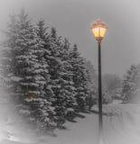 Schnee bedeckte Evergreens mit lamellierter Straßenlaterne Lizenzfreie Stockfotografie