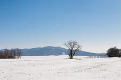 Schnee bedeckte Feld und Bäume unter blauem Himmel Lizenzfreie Stockbilder