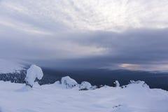 Schnee bedeckte Fichten Nordural, Russland stockfoto