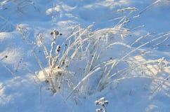 Schnee bedeckte Gräser Lizenzfreie Stockfotografie