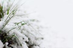 Schnee bedeckte Gras stockbilder