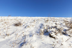 Schnee bedeckte Gras Stockfotos