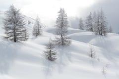 Schnee bedeckte Hügel und Bäume kurz vor Blizzard Stockbild