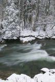 Schnee bedeckte Kiefer auf der Seite eines Flusses im Winter. Lizenzfreie Stockfotografie