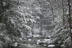 Schnee bedeckte Kiefer auf der Seite eines Flusses im Winter. Lizenzfreies Stockfoto
