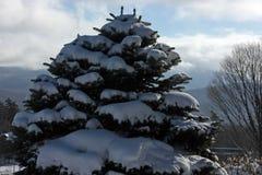 Schnee bedeckte Kiefer am Lake Placid, New York, USA Stockfotos