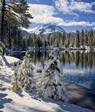 Schnee bedeckte Kiefern entlang Reflection See, Lassen Nationalpark lizenzfreie stockfotografie