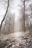 Schnee bedeckte Koniferenbäume im Wald stockfotografie
