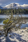 Schnee bedeckte Manzanita-Baum, Spitze des Manzanita See-, Lassen, vulkanischer Nationalpark Lassens stockfotos