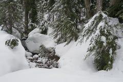 Schnee bedeckte Nebenfluss neben Berg Seymour-Schneeschuhspur lizenzfreie stockbilder