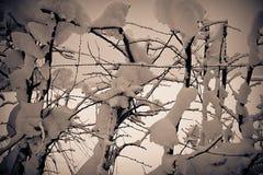 Schnee bedeckte offene Hecke und Stacheldraht Stockfotos