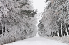 Schnee bedeckte Straße durch Wald Lizenzfreies Stockbild