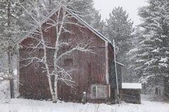 Schnee bedeckte Suppengrün und eine rote Scheune. Lizenzfreies Stockfoto