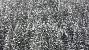 Schnee bedeckte Treetops Stockbilder